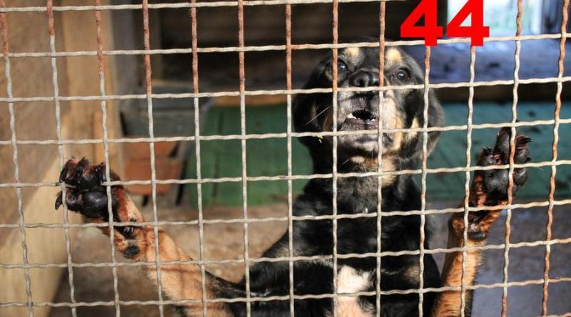 Horror Tierschutzhof geräumt - 68 Hunde gerettet - Foto: Mensch mit Tier - wir helfen Dir e. V.
