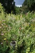 Eine Blumenwiese leistet einen wertvollen Beitrag für die Artenvielfalt und gegen das Insektensterben. Foto: Stadt Lingen