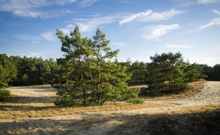 Waldbrandgefahr: Landkreis Grafschaft Bentheim erlässt Waldbrandverordnung - Foto: Landkreis Grafschaft Bentheim