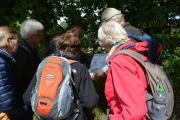 Naturführung am 30. Juni entlang der Ems in Groß Hesepe - Auf 6,5 km die Natur im Emstal entdecken - Foto: Gemeinde Geeste