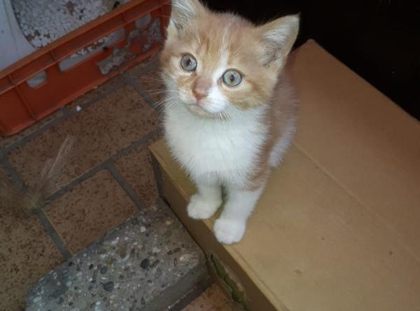 Fünf Katzenbabys in Geeste gestohlen. Foto: Privat der Besitzer