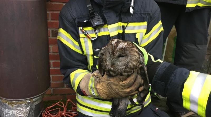 Der Steinkauz ist unverletzt gerettet und in dann in eine nahe Baumreihe entflogen. - Foto: Feuerwehr Neuenhaus