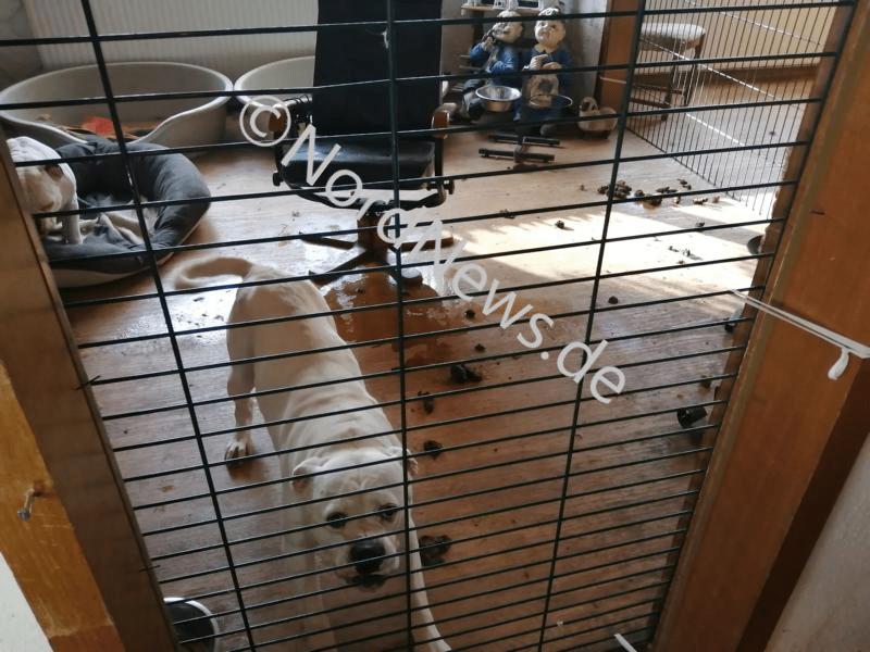 Trenngitter haben die verschiedenen Räume abgegrenzt. In fast jedem Raum des Hauses waren Hunde untergebracht. Foto: NordNews.de