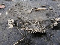 Tierschutzhof: Hundeskelette in einer Knochengrube vor dem Hof. Foto: NordNews.de