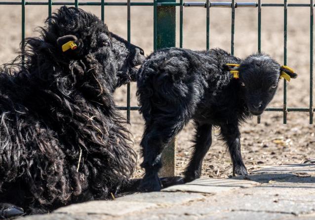 Tierpark Nordhorn weiterhin geschlossen - Keine Zooöffnung vor Mai - Foto: Wilfried Jürgens