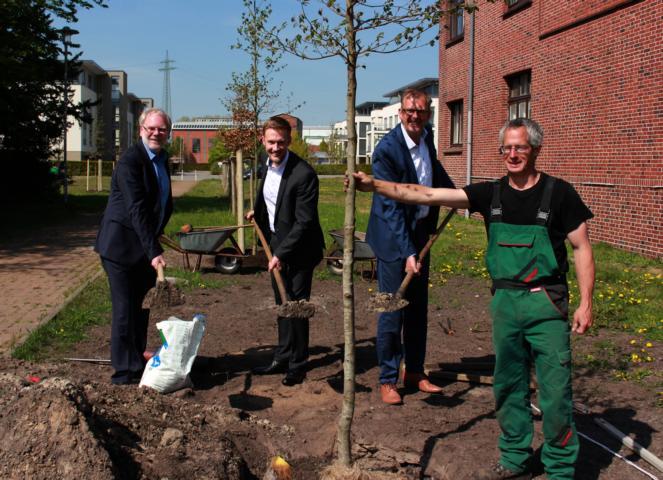 Neue Bäume im Stadtgebiet - Foto: Stadt Papenburg
