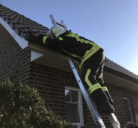 Hecke am Wohnhaus in Dörpen fängt Feuer- Nachbarn mit Wasserschläuche verhinderten größeren Schaden - Foto: SG Dörpen / Feuerwehr
