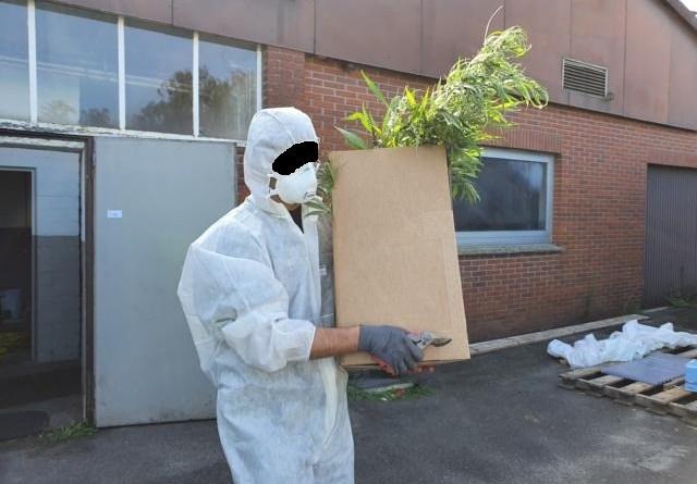 4000 Cannabis Pflanzen sichergestellt - große Polizeiaktion in Wielen. Foto: B.Neesen