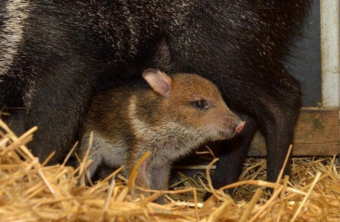 Tierpark Nordhorn - Informationen zur Selbsttestung - Foto: Franz Frieling