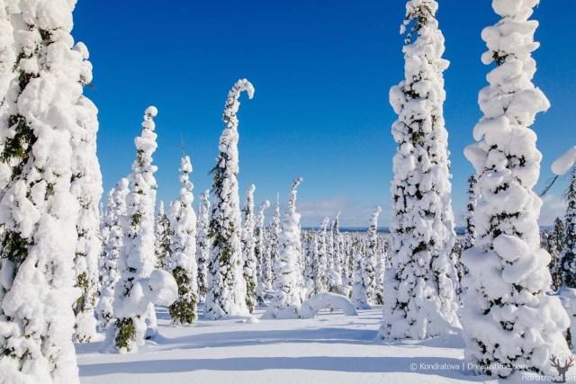 Зима в Лапландии. Природа и география Финляндии.