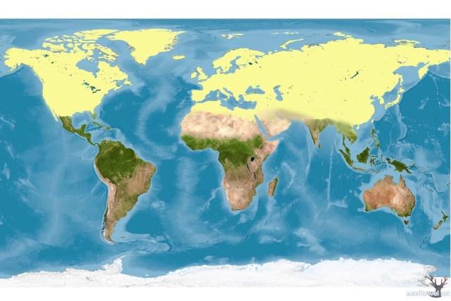 Голарктика. (Границы области выделены жёлтым цветом)