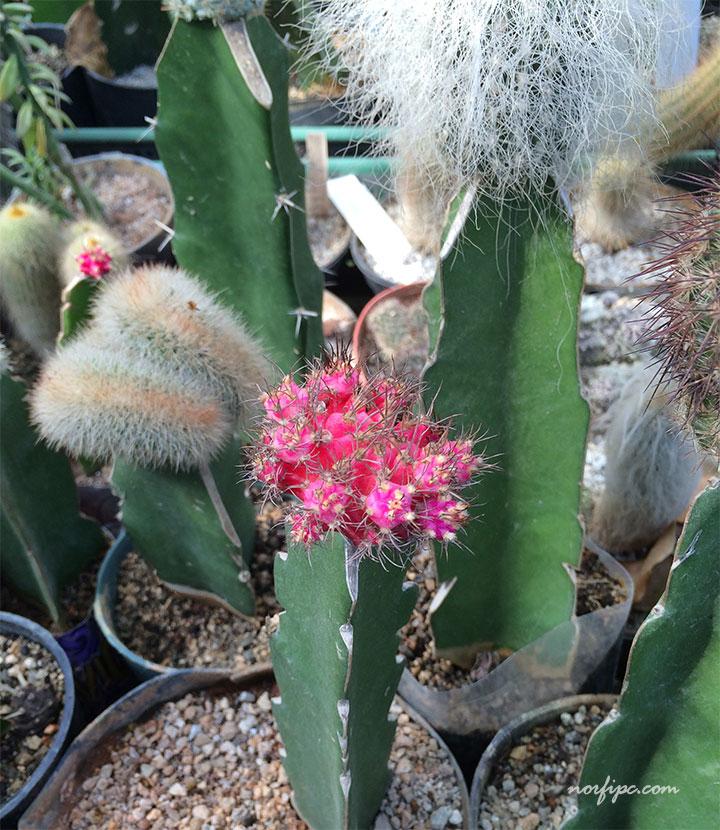 El Vivero Lotera la mayor coleccin de cactus de Cuba