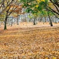 【動画】秋になり寒くなってきましたね 。Autumn has come.