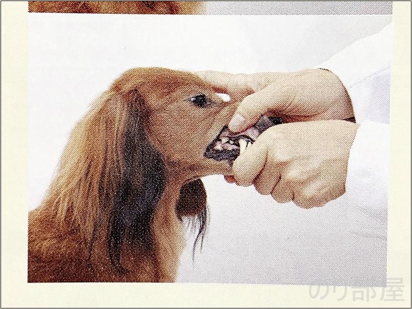 慣れてきたら唇をめくる練習をします。  犬の歯磨きのために 口(マズル)を触られることに慣らせましょう【必見】犬の歯磨きで歯周病や病気を防ぐオススメの方法。放置すると頬に穴が空きます。歯磨きを嫌がる犬には水やご飯に混ぜて予防を!