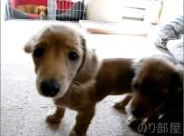 愛犬のチャチャが亡くなって1年が経ちました。 リビングの遺骨&写真には毎日声をかけるし、自分のデスクのモニターの下には写真が置いてある。