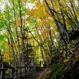 善五郎の滝上部の階段