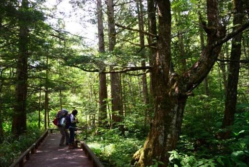 夏の女小屋の森