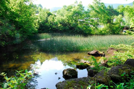 日陰の小道の池