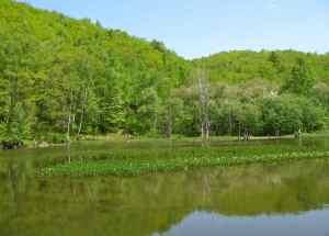 一の瀬園地 あざみ池の新緑