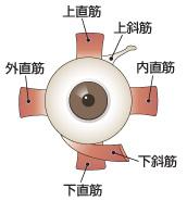 眼精疲労 目薬 おすすめ 頭痛 症状 対策 治し方 首 眼精疲労とは 眼鏡 コンタクト 視力低下 肩こり 充血 栄養 食べ物 緑内障 目の奥