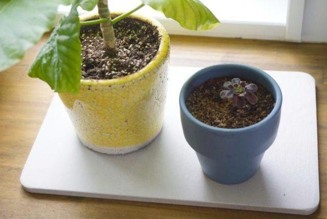 100均 ダイソー 珪藻土マット 珪藻土バスマット 珪藻土水切りマット サイズ 金額 お手入れ方法 捨て方