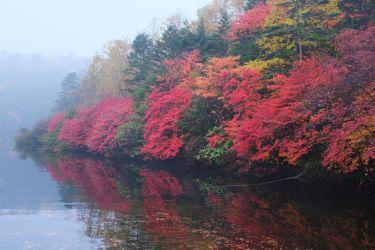 【X-T3】長野県白駒池の紅葉 富士フイルムで楽しむ紅葉