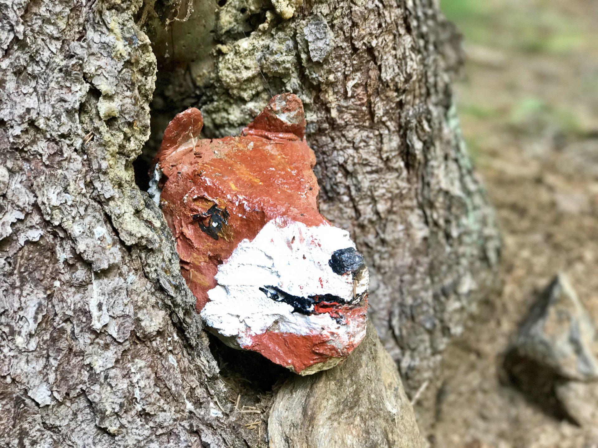 Steinfuchs im Baum
