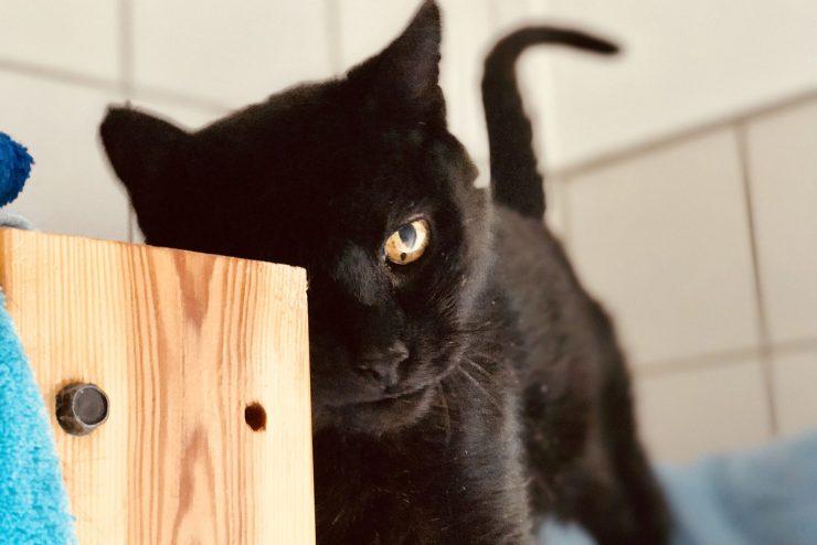 Eine schwarze Katze im Tierheim Dachau