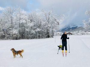 Mit Hunden auf der Loipe