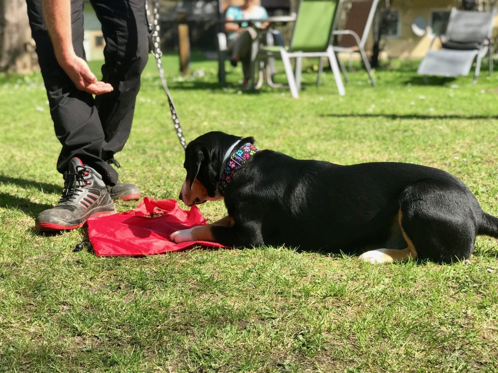 Hundehotel – der Trainer übt mit einem Hund