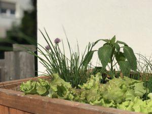 Gärtnern mit Kindern – So sieht das Floralis-Hochbeet im 2. Jahr aus.