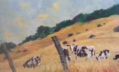 Nicasio Cows