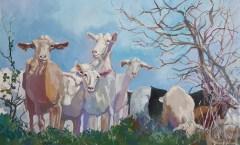 Gozo Goats