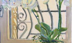 Window Orchid