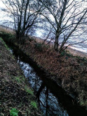 Somerset Levels (6)