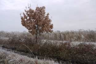 Snow on the Somerset Levels 2010