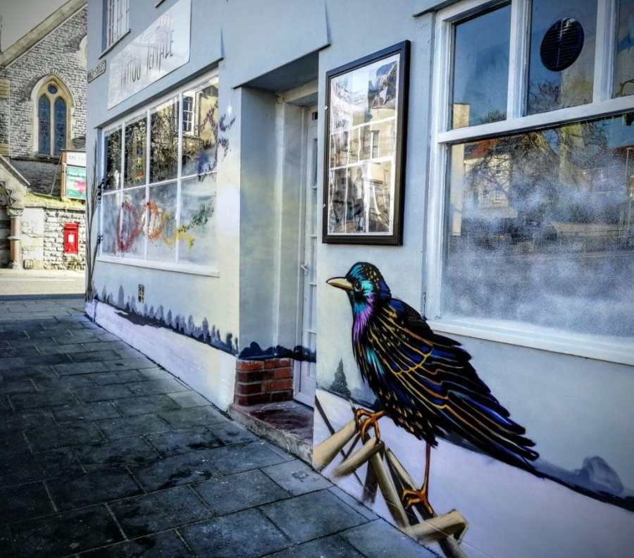Starling Mural on Glastonbury Town shop