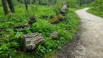 Tree off the path