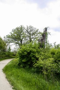 An old stump
