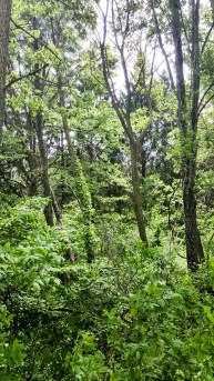 Thick, green growth along the Trail