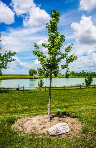 A very special tree where we memorialized my friend Jared