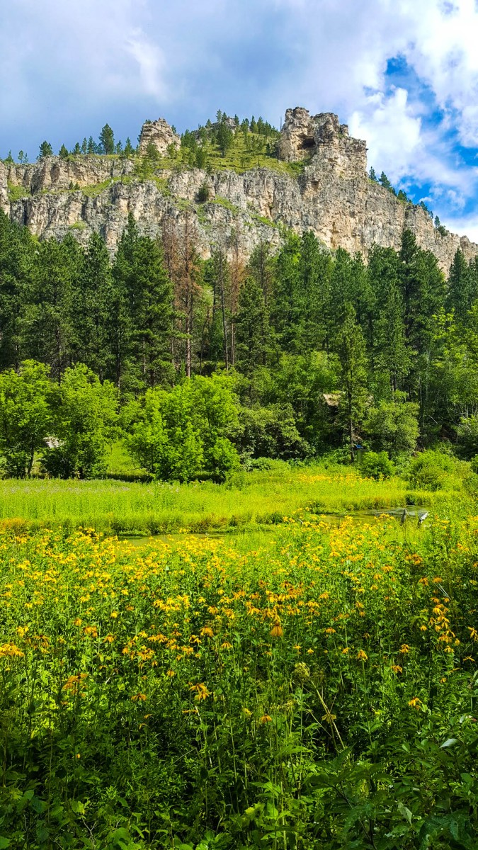 Wildflowers in Spearfish Canyon, South Dakota