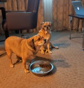 Our spoiled dogs enjoying a room service breakfast