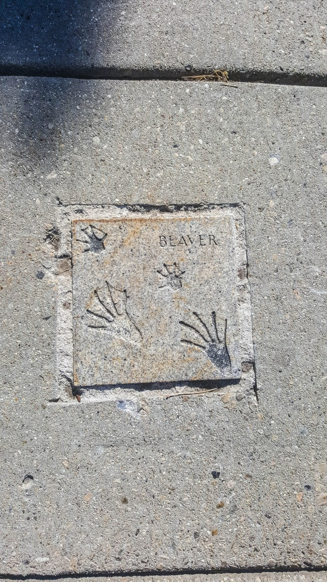 Animal tracks along City Creek