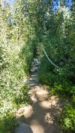 Near the top, the path narrows, begins to crawl through some brush and gets rockier