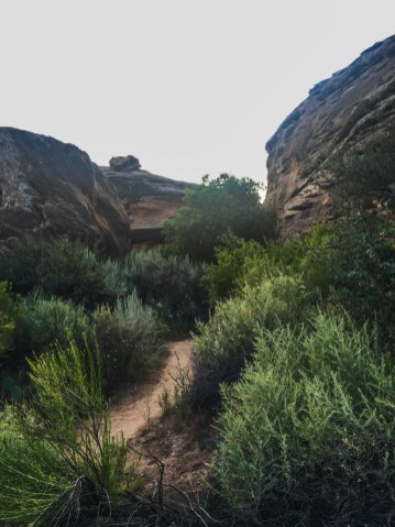 Cave Spring Trail
