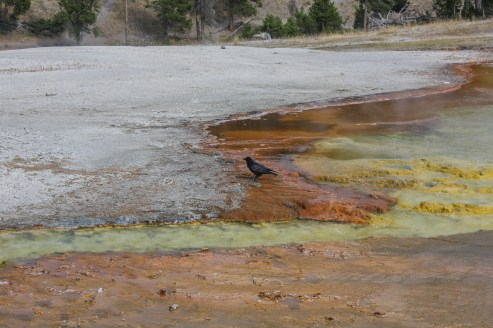 Contrasting colors at Midway Geyser Basin