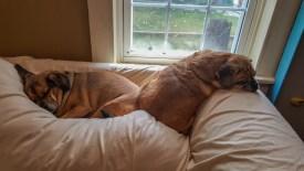 Rainy day naps!