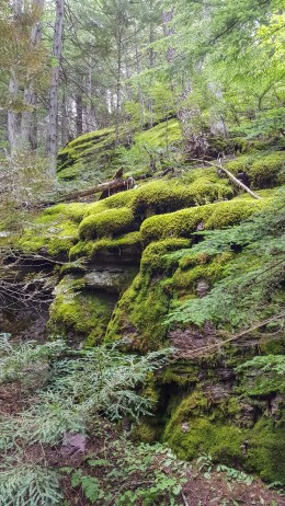 Thick, bright, green moss covers rocks in Glacier National Park