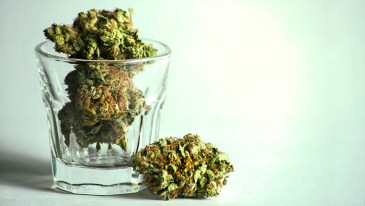 Marijuana or Alcohol